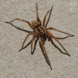 Уничтожение пауков в Энгельсе